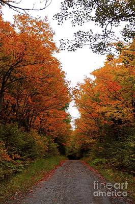 Photograph - Autumn Backroads by Sandra Updyke