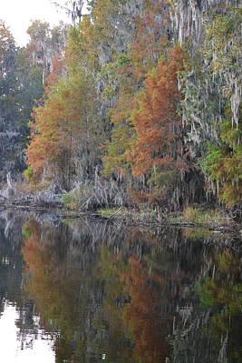Photograph - Autumn Bald Cypress On Alligator Lake by rd Erickson