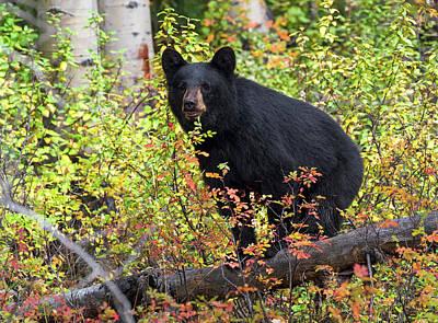 Photograph - Autumn Bear by Scott Warner