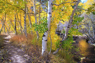 Photograph - Autumn Beauty At Sherwin Creek by Lynn Bauer