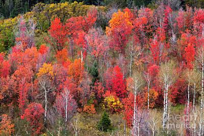 Photograph - Autumn Beauty by David Millenheft