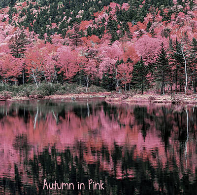 Autumn Leaf On Water Digital Art - Autumn Beauty In Pink by Black Brook Photography