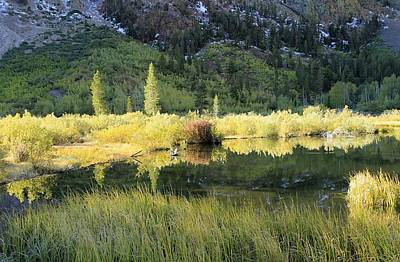 Photograph - Autumn Beaver Pond by Sean Sarsfield