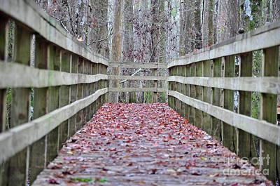 Photograph - Autumn Beckons by Nanette OHara