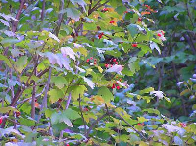 Photograph - Autumn Berries by Oleg Zavarzin