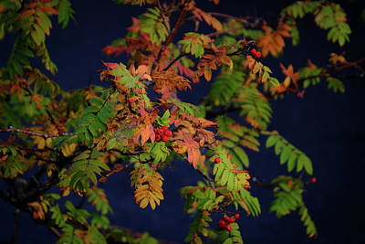 Photograph - Autumn Berries by RKAB Works