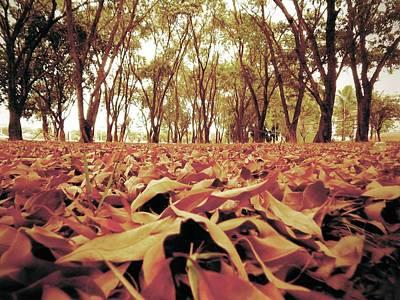 Photograph - Autumn by Beto Machado