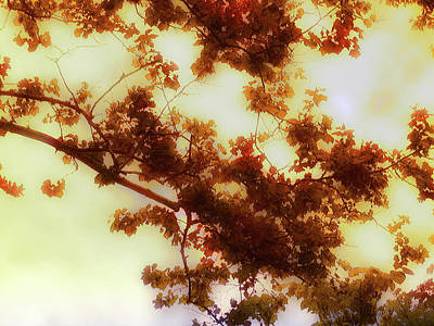 Leif Photograph - Autumn by Bill Cannon