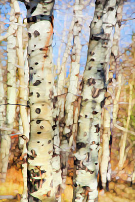 Photograph - Autumn Birch 2 by Theresa Tahara