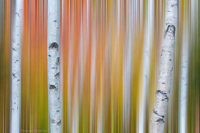 Photograph - Autumn Birch Abstract by Expressive Landscapes Nature Photography