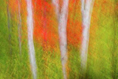Photograph - Autumn Birch by Michael Blanchette