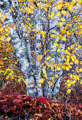 Photograph - Autumn Birch Tapestry by Marty Saccone
