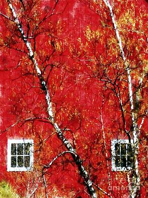 Photograph - Autumn Birch Trees Country Red Barn by Janine Riley