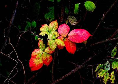 Photograph - Autumn Blackberry Leaves by Karen Molenaar Terrell