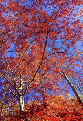 Art Print featuring the photograph Autumn Blaze by Karen Wiles