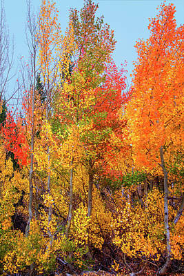 Photograph - Autumn Blaze by Lynn Bauer