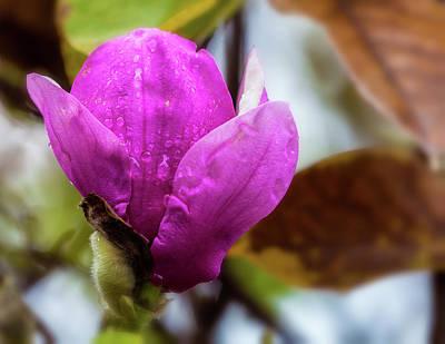 Photograph - Autumn Bloom 1 by Jonathan Nguyen
