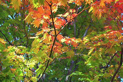 Photograph - Autumn Blooming by Bonnie Follett