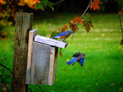 Photograph - Autumn Blue Birds by Scott Hovind