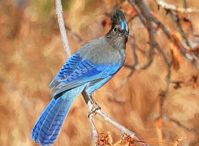 Stellers Jays Photograph - Autumn Blues by Donna Kennedy