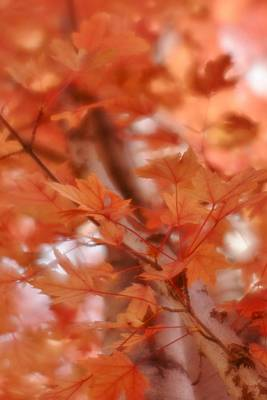 Photograph - Autumn Blush by Diane Alexander