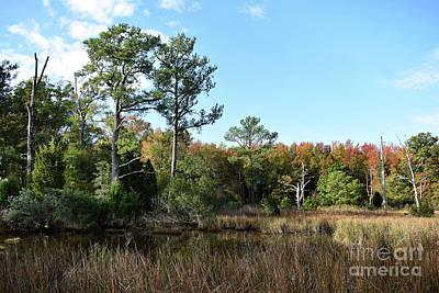 Photograph - Autumn Bog by Skip Willits