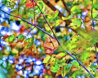 Photograph - Autumn Bokeh by Kerri Farley