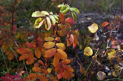 Photograph - Autumn Bouquet by Cascade Colors