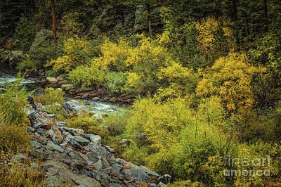 Autumn Bouquet Art Print by Jon Burch Photography