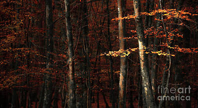 Autumn Landscape Mixed Media - Autumn Branch by Svetlana Sewell