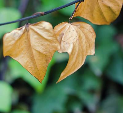 Photograph - Autumn Breath by Andrea Mazzocchetti