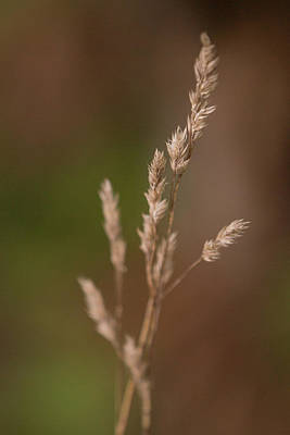 Photograph - Autumn Breeze by Elvira Pinkhas