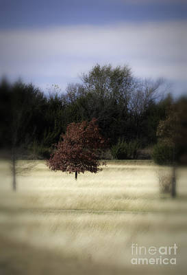 Photograph - Autumn Breeze by Fred Lassmann