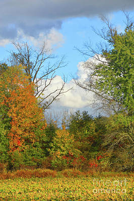 Photograph - Autumn Breeze Nature Art by Robyn King