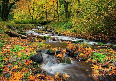 Photograph - Autumn Bridge by Mike Dawson