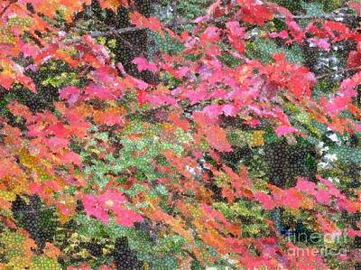 Photograph - Autumn Bright by Sybil Staples