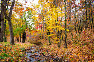 Photograph - Autumn Brook by SR Green
