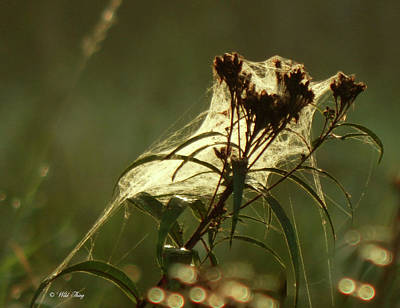 Photograph - Autumn Burdock by Wild Thing