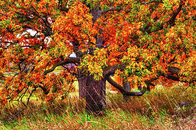 Photograph - Autumn Burr Oak by Roger Passman