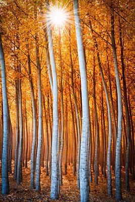 Print featuring the photograph Autumn Canopy Burst by Dan Mihai