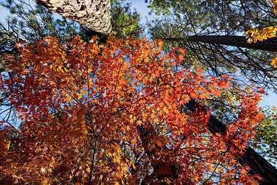 Photograph - Autumn Canopy In Orange by Kathleen Bishop