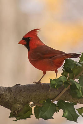 Photograph - Autumn Cardinal New Jersey by Terry DeLuco