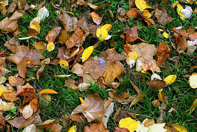 Photograph - Autumn Carpet 002 by Dorin Adrian Berbier