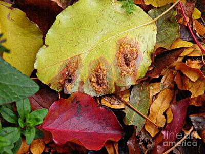 Photograph - Autumn Carpet by Sarah Loft