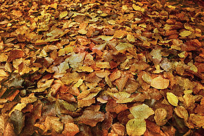 Photograph - Autumn Carpet by Vittorio Chiampan