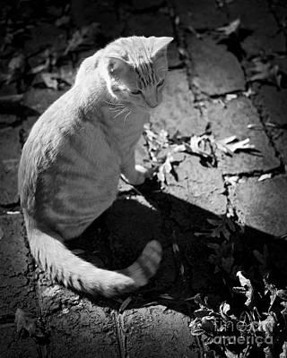 Photograph - Autumn Cat by Patrick M Lynch