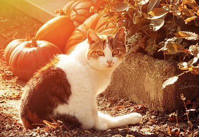 Photograph - Autumn Cat by Wim Lanclus