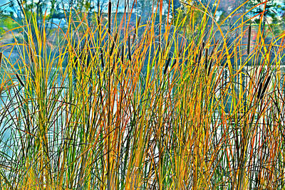 Vintage Uk Posters - Autumn Cattails by Alan C Wade