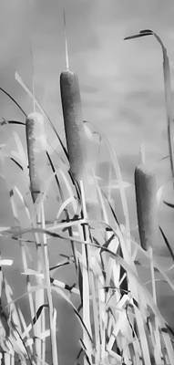 Photograph - Cattail Whispers by Greg Jackson