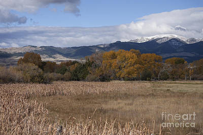 Snow Photograph - Autumn Cattails by Carolyn Brown